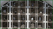 Bird Proofing: Pigeon Netting, Anti-Roosting Spikes & Sprint Wire Systems
